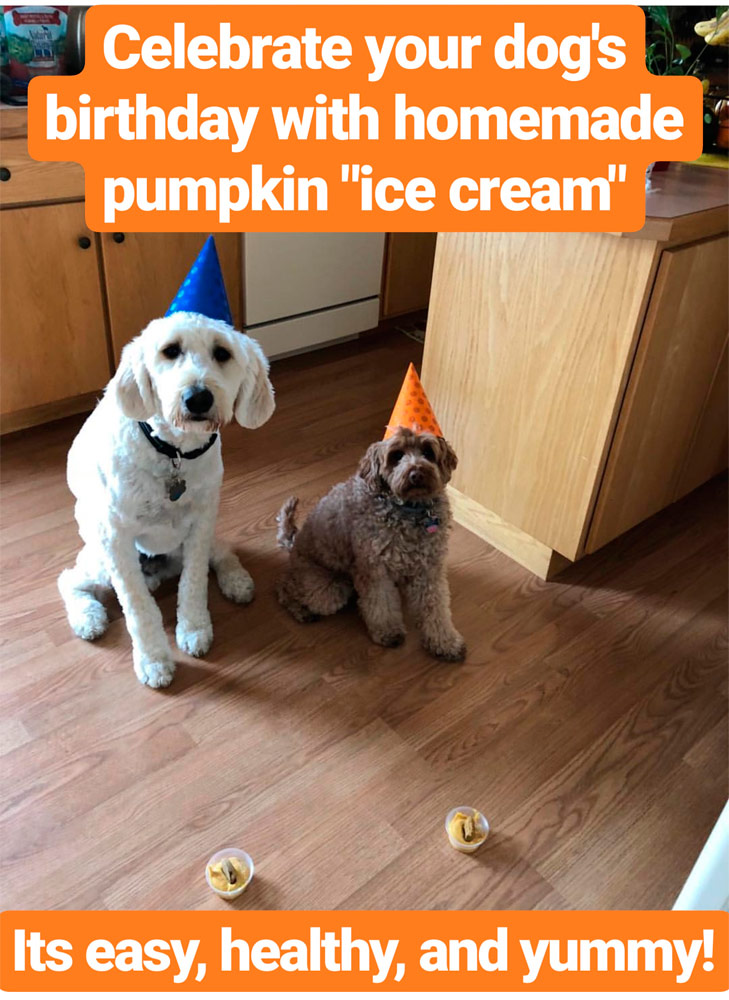 Sir Ferguson The Labradoodle Birthday Pumpkin Ice Cream For Your Dogs