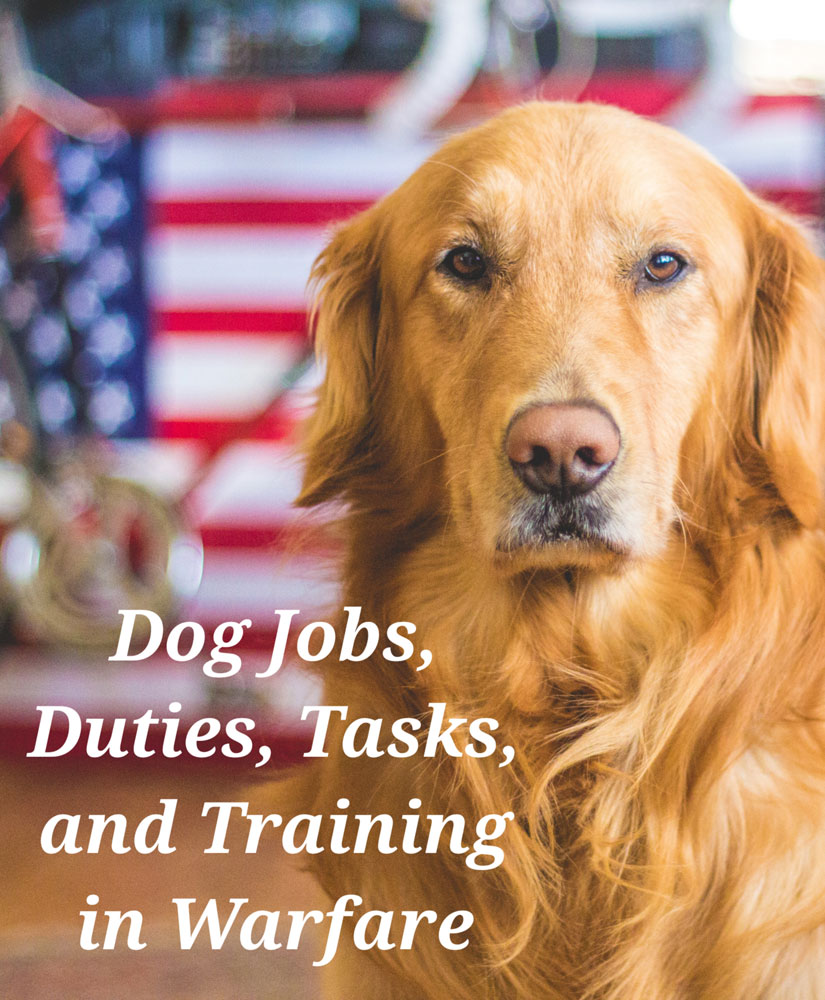 Dog Duties and Training in War