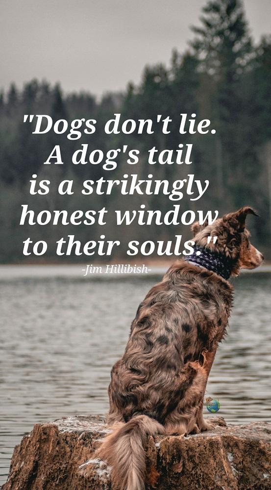 Dog Quote Honest Souls