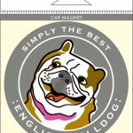 English Bulldog Car Magnet 4×4″ 1