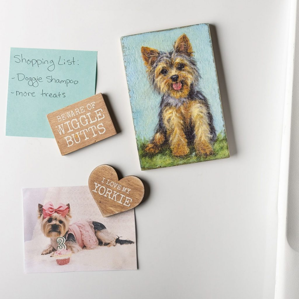 How to Use Metal Dog Magnet Set