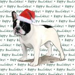 French Bulldog Dog Coasters Christmas Themed Black/White 1