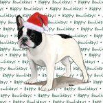 French Bulldog Dog Coasters Christmas Themed Black/White