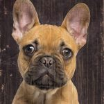 French Bulldog Sign – I Love My 5×10 1
