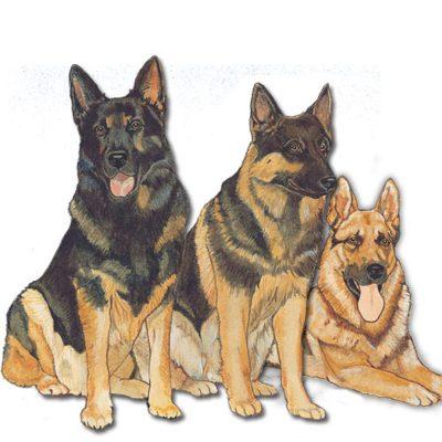 German Shepherd Wooden Magnet Family