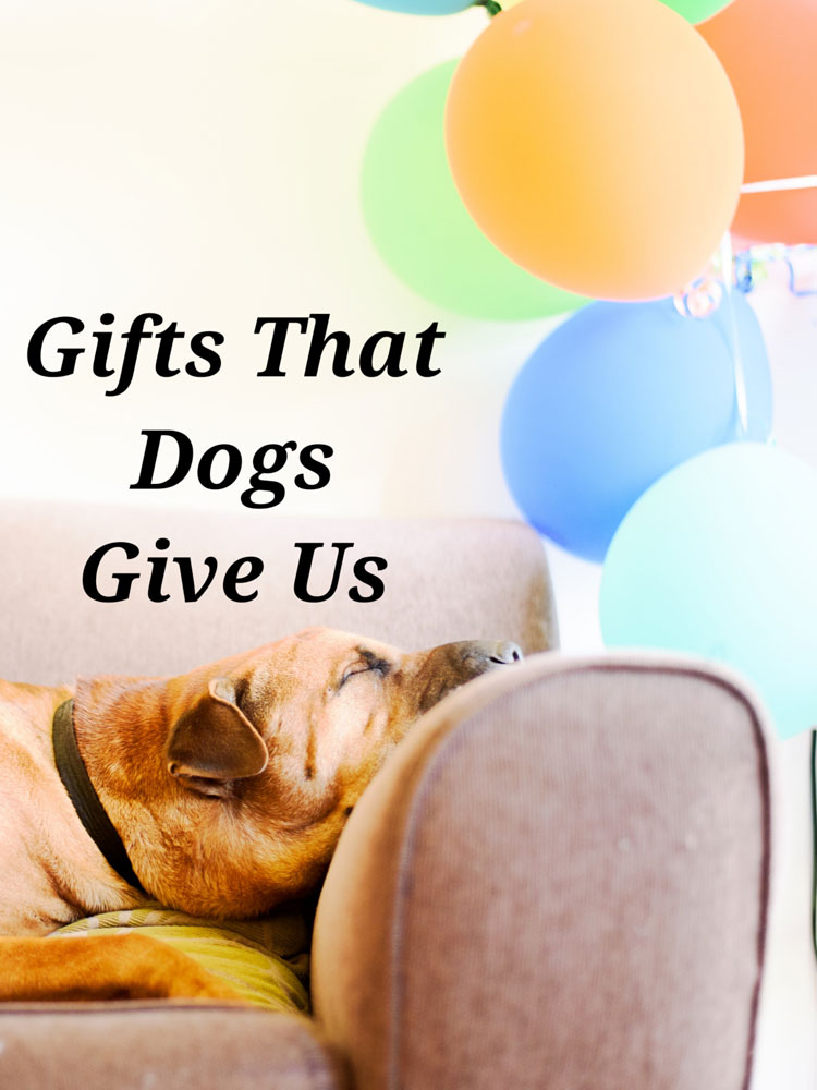 Gifts Dogs Give Us