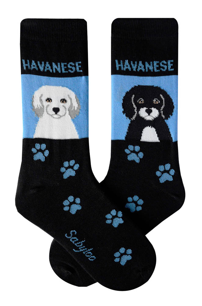 Havanese White and Black Socks Blue and Black in Color