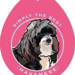 Havanese Sticker 4×4″ 1