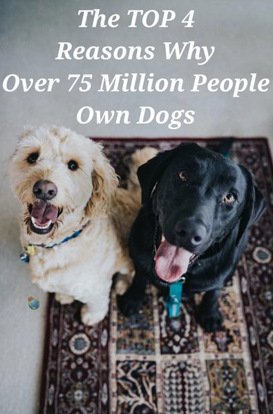 How Many People Own Dogs & Why?