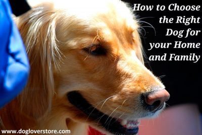 How to Choose the Right Dog for Your Home & Family