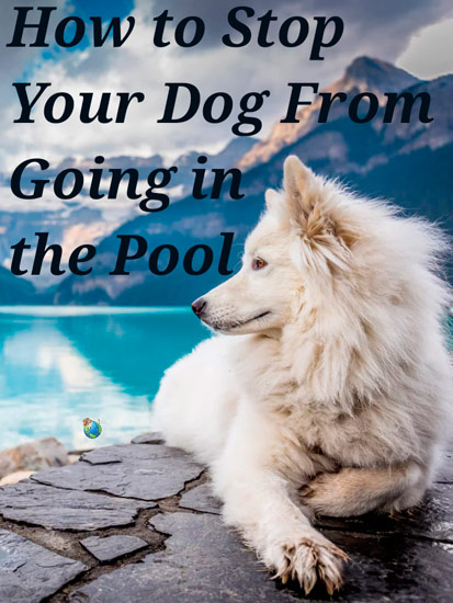 How to Stop Your Dog From Going in the Pool