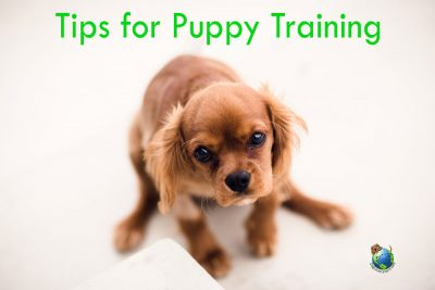 important-pointers-for-puppy-training