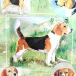 Beagle-Dog-Gift-Present-Wrap-181027073603