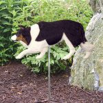 Border-Collie-Outdoor-Garden-Dog-Sign-Hand-Painted-Figure-Black-Tri-181369643753