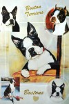 Boston-Terrier-Dog-Gift-Present-Wrap-181379441765