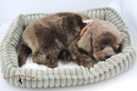 Chocolate-Lab-Life-Like-Stuffed-Animal-Breathing-Dog-Perfect-Petzzz-181308636284