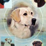 Labrador-Dog-Gift-Present-Wrap-400341658828