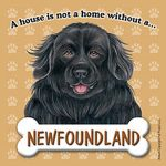 Newfoundland-Dog-Magnet-Sign-House-Is-Not-A-Home-400362014793