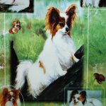 Papillon-Dog-Gift-Present-Wrap-181027073732