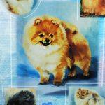 Pomeranian-Dog-Gift-Present-Wrap-181027073740