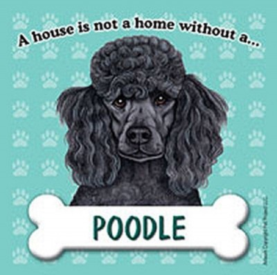 Poodle-Dog-Magnet-Sign-House-Is-Not-A-Home-Blk-400625457530