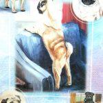 Pug-Dog-Gift-Present-Wrap-181027073768