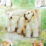 Soft-Coated-Wheaten-Dog-Gift-Present-Wrap-400341659105