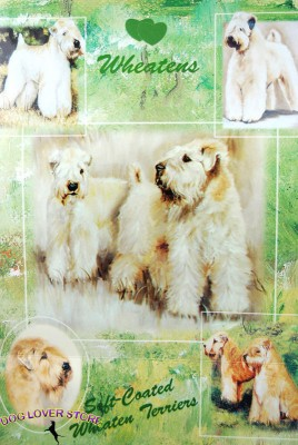 Soft-Coated-Wheaten-Dog-Gift-Present-Wrap-400341659105