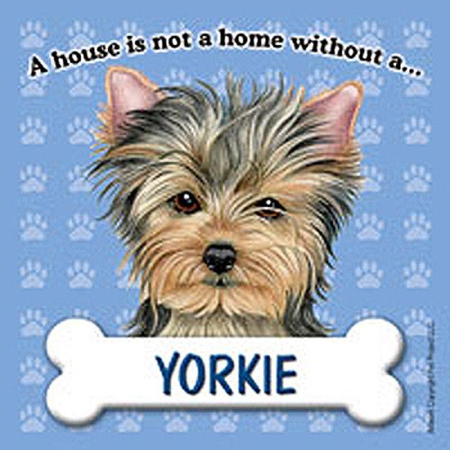 yorkie dog magnet sign house is not a home ebay. Black Bedroom Furniture Sets. Home Design Ideas