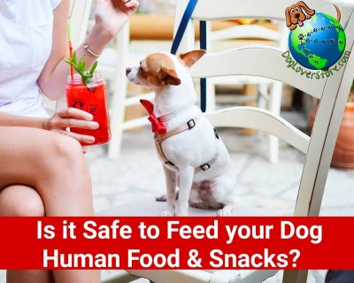 Feeding Your Dog Human Food & Snacks - Is it Okay?