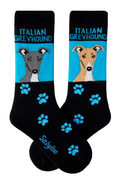 Italian Greyhound Socks on Blue Background