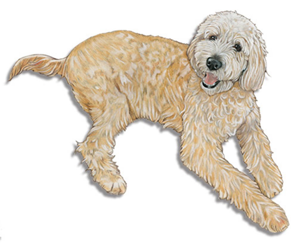 Labradoodle Wooden Magnet Cream