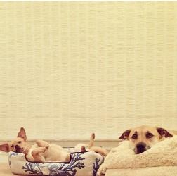 Lauren Conrad Mixed Dogs