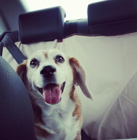 Puddin' The Dog