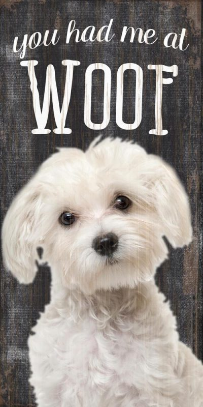 Maltese Sign – You Had me at WOOF 5×10 1