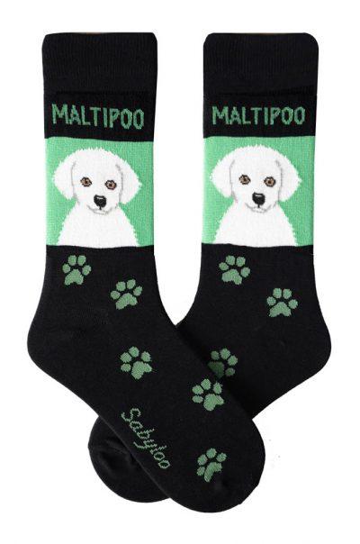 Maltipoo White Socks - Green & Black in Color