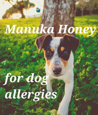 Manuka Honey For Dog Allergies