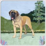 Mastiff Yard Scene Coasters Set of 4
