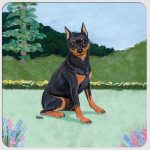 Miniature Pinscher Yard Scene Coasters Set of 4 Black