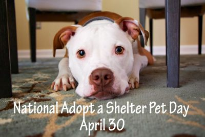 national-adopt-a-shelter-pet-day