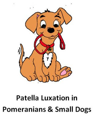 Patella Luxation - Pomeranians & Small Dogs