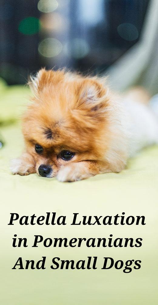 Patella Luxation