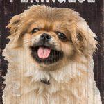 Pekingese Sign – I Love My 5×10 1