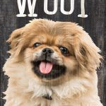 Pekingese Sign – You Had me at WOOF 5×10 1