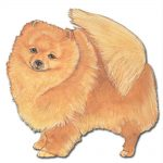 Pomeranian Wooden Magnet Red