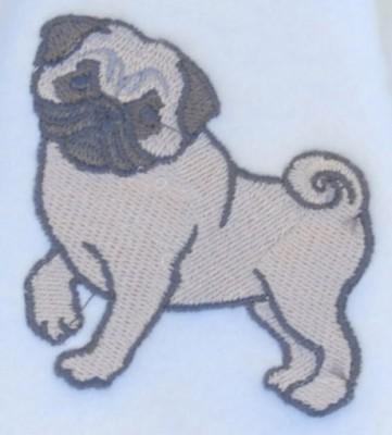 pug-fawn-scarf-close-up