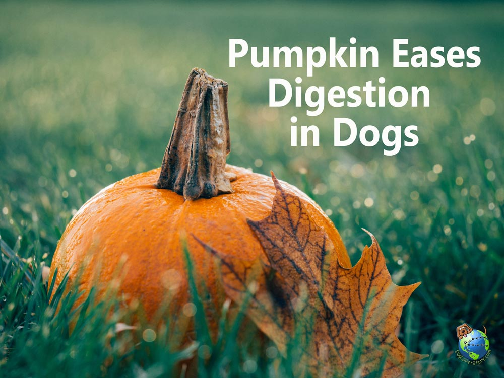 Image Result For Dog Canned Pumpkin Diarrhea