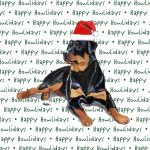 Rottweiler Dog Coasters Christmas Themed 1