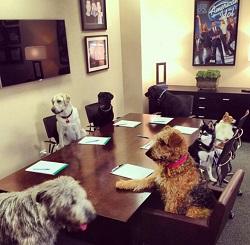 Ryan Seacrest Dog Photo