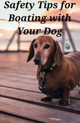 Safety Tips for Boating With Your Dog
